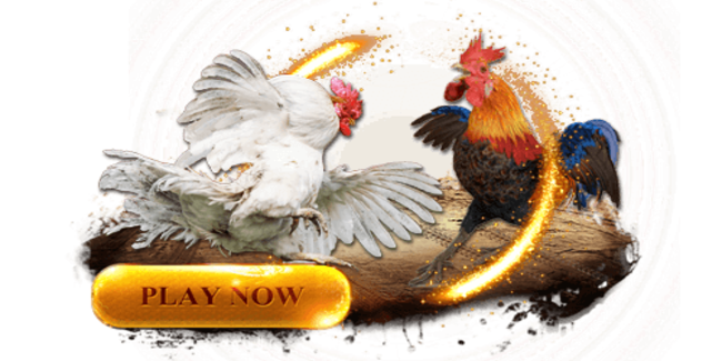 Bermain Sabung Ayam yang Memberi Keuntungan